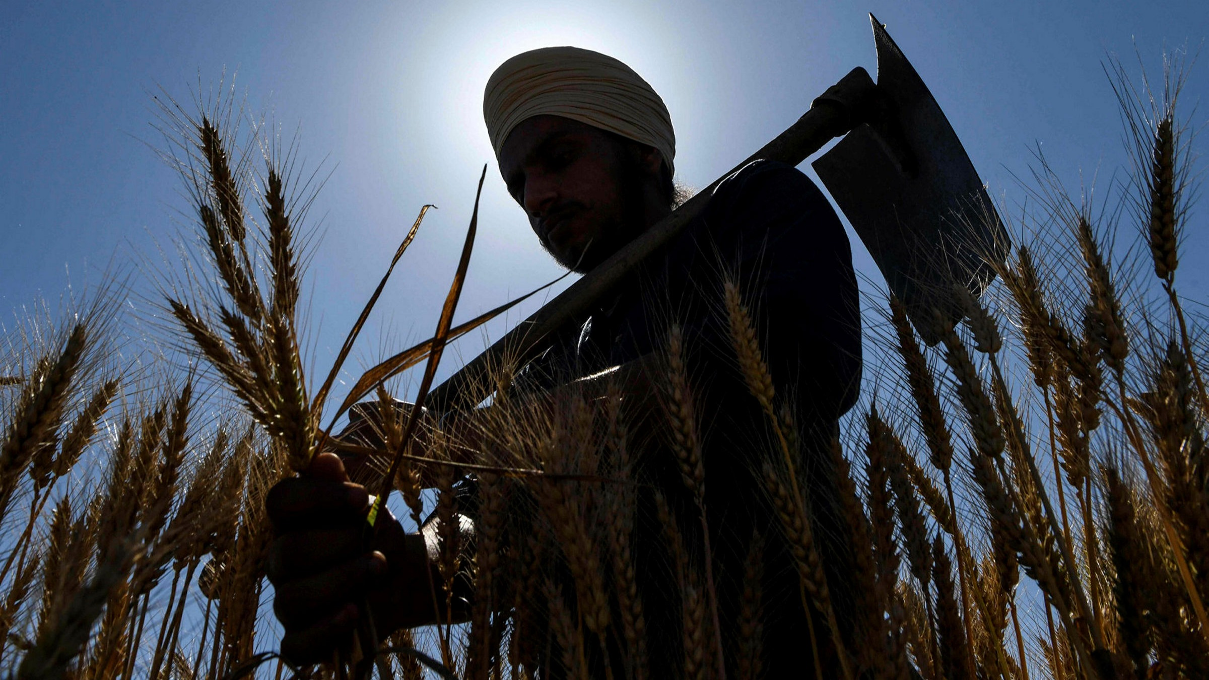 India's coronavirus crisis hits country's farmers and food ...