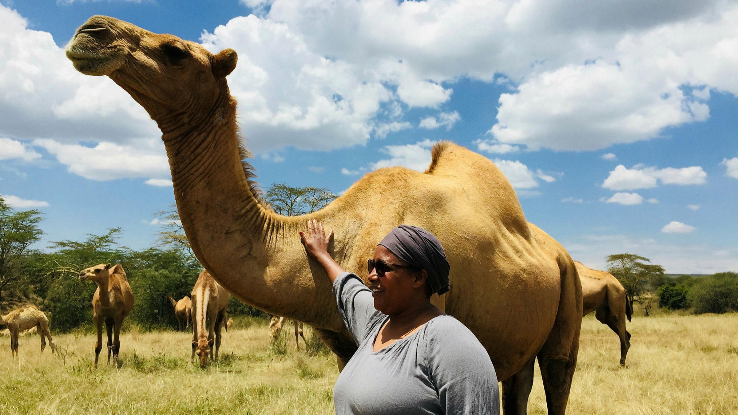 Camel Camel Manufacturing
