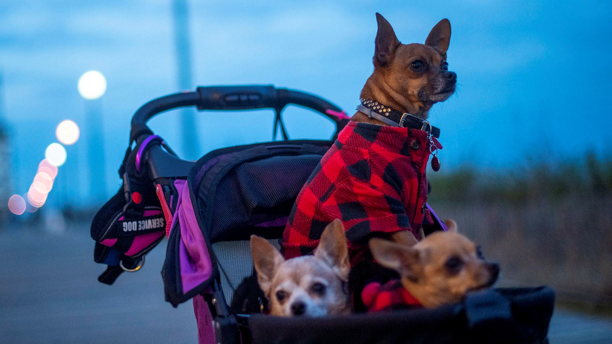ft.com - Dave Lee in San Francisco - Chewy cashed in on pandemic pet boom but now must keep leash on Amazon